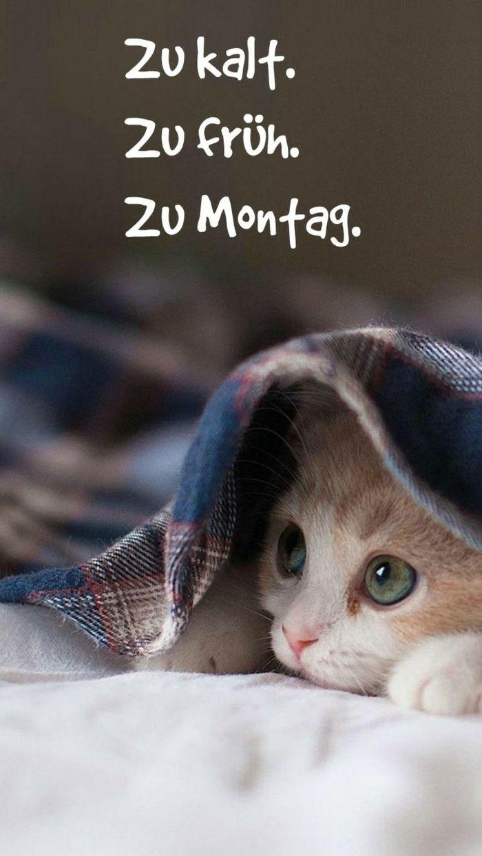 Montag-bilder-2